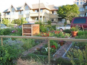 Vegetable plots and composter